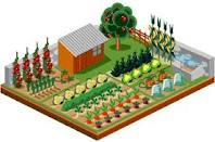 Jardinage-Potager 1